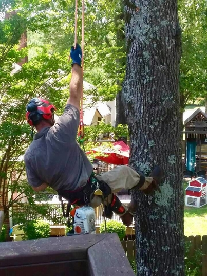Picture of our tree services in Charleston, SC doing tree trimming.